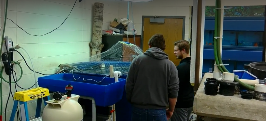 Green Bay students raise trout in class